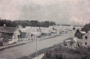 1913Ongaonga
